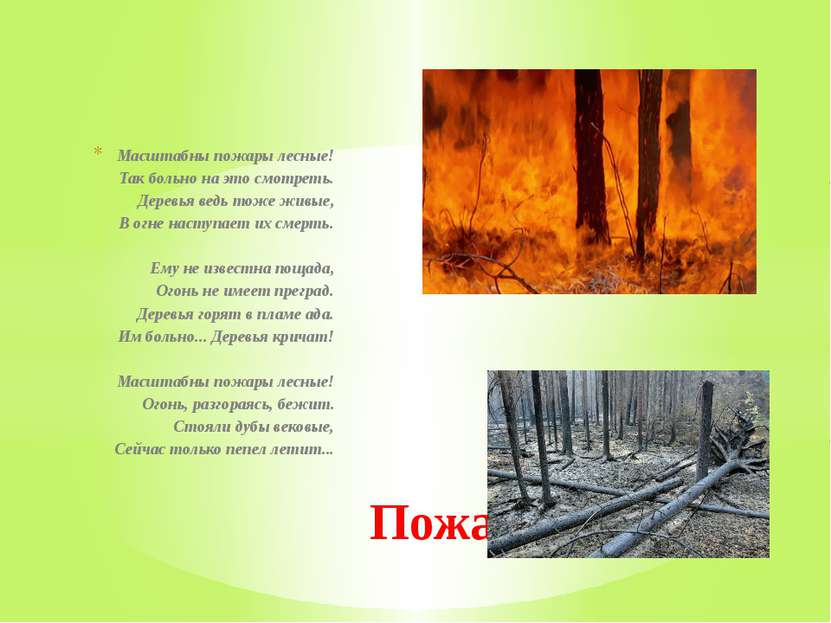 Масштабны пожары лесные! Так больно на это смотреть. Деревья ведь тоже живы...