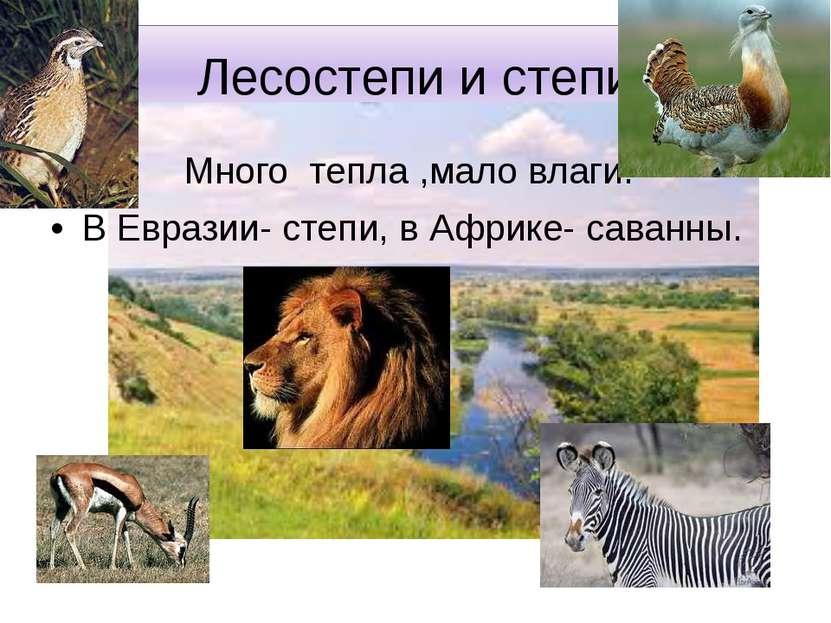 Лесостепи и степи Много тепла ,мало влаги. В Евразии- степи, в Африке- саванны.