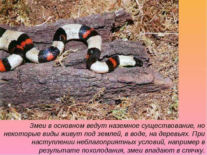 Змеи в основном ведут наземное существование, но некоторые виды живут под зем...