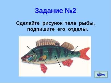 Задание №2 Сделайте рисунок тела рыбы, подпишите его отделы. Далее