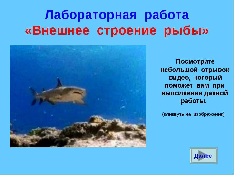 Лабораторная работа «Внешнее строение рыбы» Посмотрите небольшой отрывок виде...