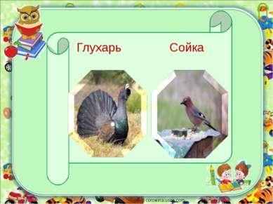 corowina.ucoz.com Глухарь Сойка