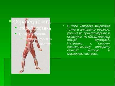 В теле человека выделяют также и аппараты органов, разных по происхождению и ...