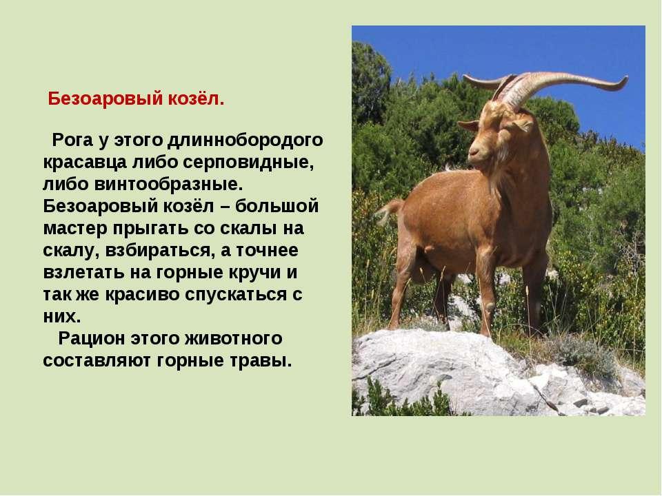 Безоаровый козёл. Рога у этого длиннобородого красавца либо серповидные, либо...