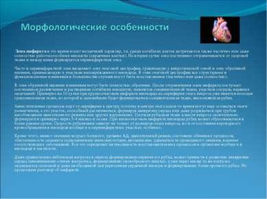 Зона инфаркта в это время носит мозаичный характер, т.е. среди погибших клето...