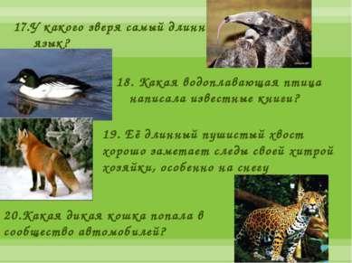 17.У какого зверя самый длинный язык? 18.Какая водоплавающая птица написала ...