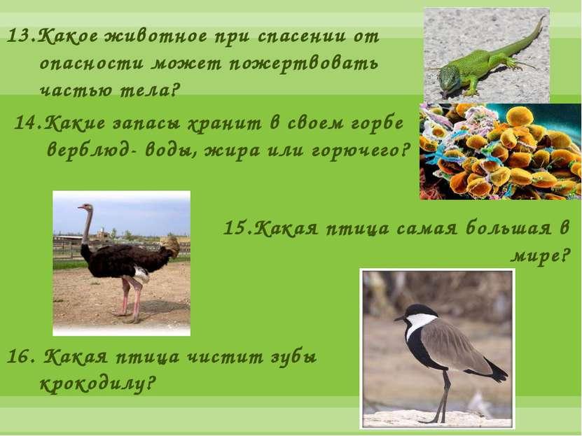 13.Какое животное при спасении от опасности может пожертвовать частью тела? 1...