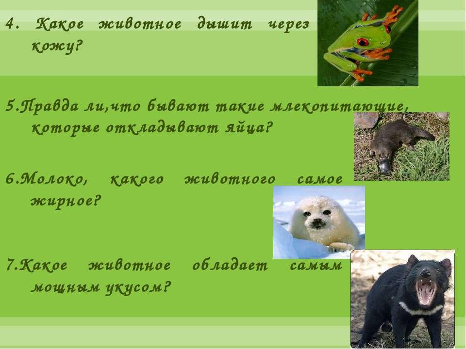 4. Какое животное дышит через кожу? 5.Правда ли,что бывают такие млекопитающи...