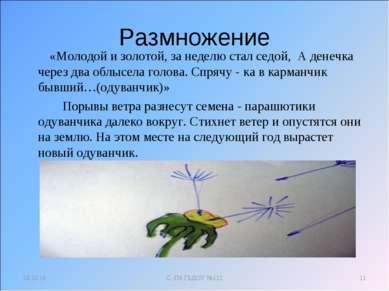 Размножение «Молодой и золотой, за неделю стал седой, А денечка через два обл...