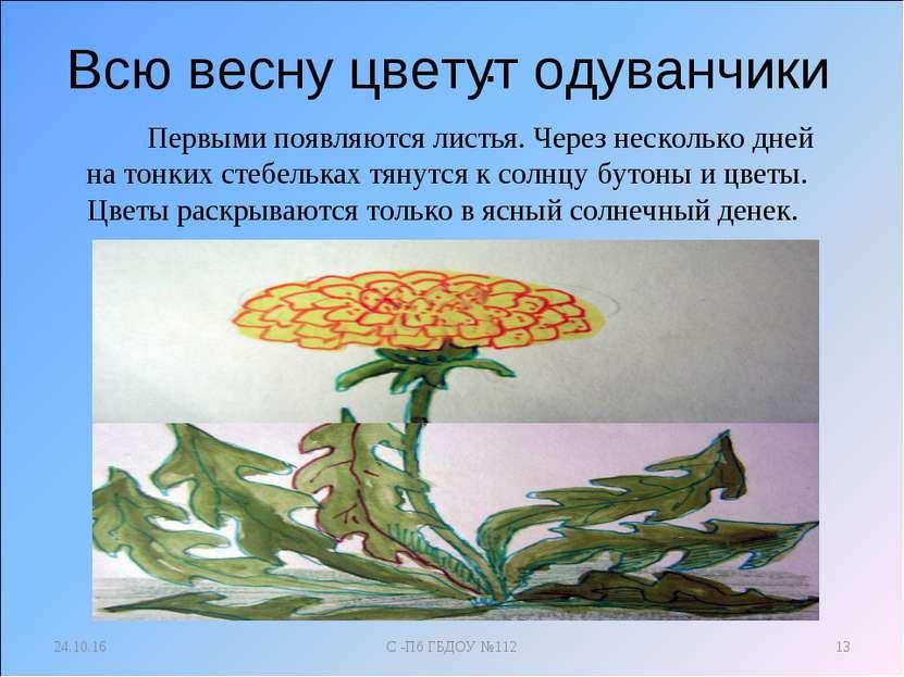 . * С -Пб ГБДОУ №112 * Всю весну цветут одуванчики Первыми появляются листья....