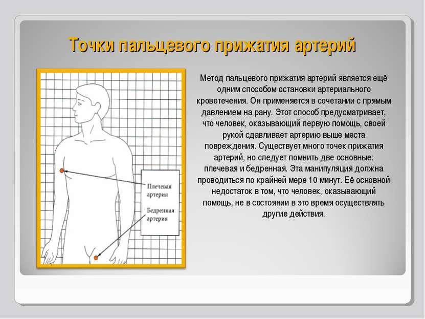 Точки пальцевого прижатия артерий Метод пальцевого прижатия артерий является ...