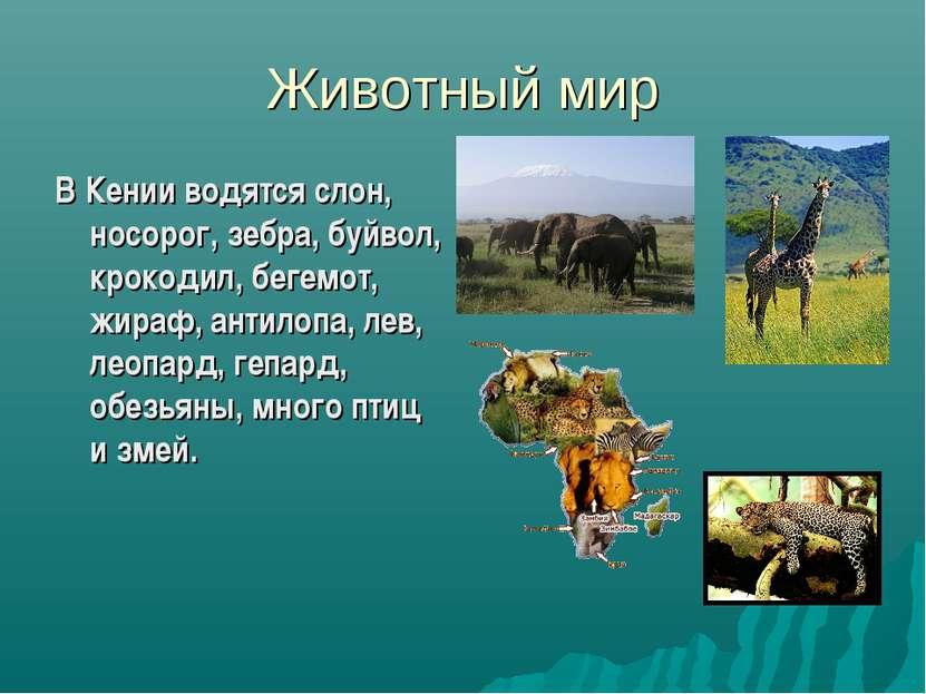Животный мир В Кении водятся слон, носорог, зебра, буйвол, крокодил, бегемот,...
