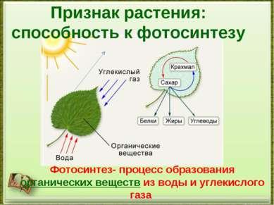 Признак растения: способность к фотосинтезу Фотосинтез- процесс образования о...