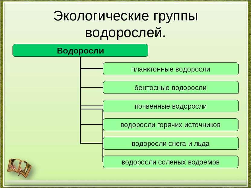 Экологические группы водорослей.
