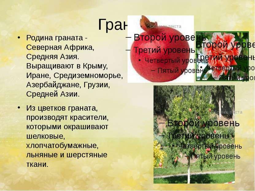 Гранат. Родина граната - Северная Африка, Средняя Азия. Выращивают в Крыму, И...