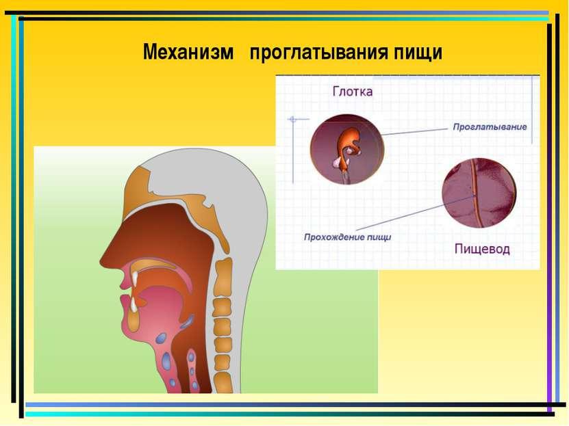 Механизм проглатывания пищи