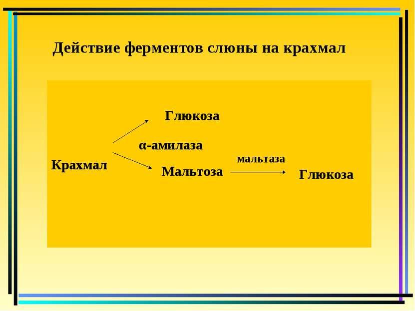 Действие ферментов слюны на крахмал Крахмал Глюкоза α-амилаза Мальтоза мальта...