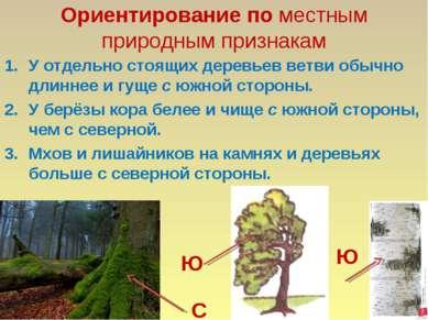 Ориентирование по местным природным признакам У отдельно стоящих деревьев вет...