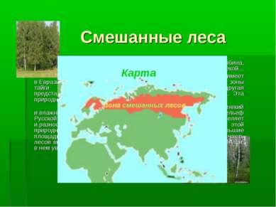 Смешанные леса То березка, то рябина, Куст ракиты над рекой…  Зона смешанных...