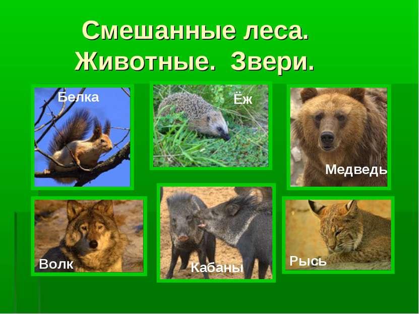 Смешанные леса. Животные. Звери. Белка Ёж Медведь Волк Кабаны Рысь