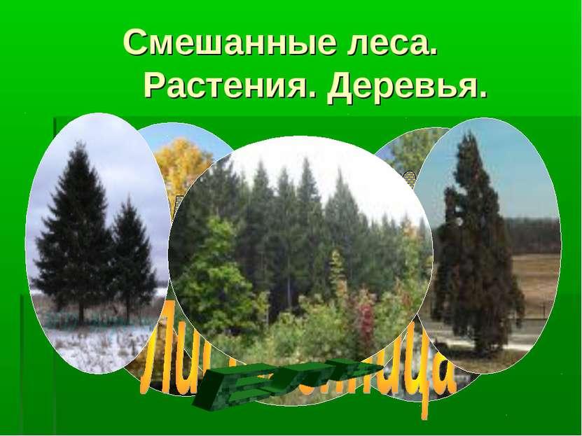 Смешанные леса. Растения. Деревья.