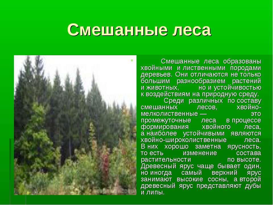 Смешанные леса Смешанные леса образованы хвойными илиственными породами дере...