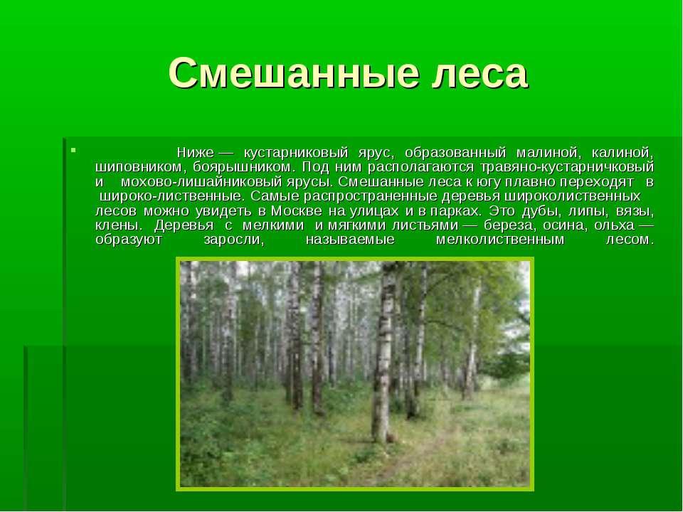 Смешанные леса Ниже— кустарниковый ярус, образованный малиной, калиной, шипо...