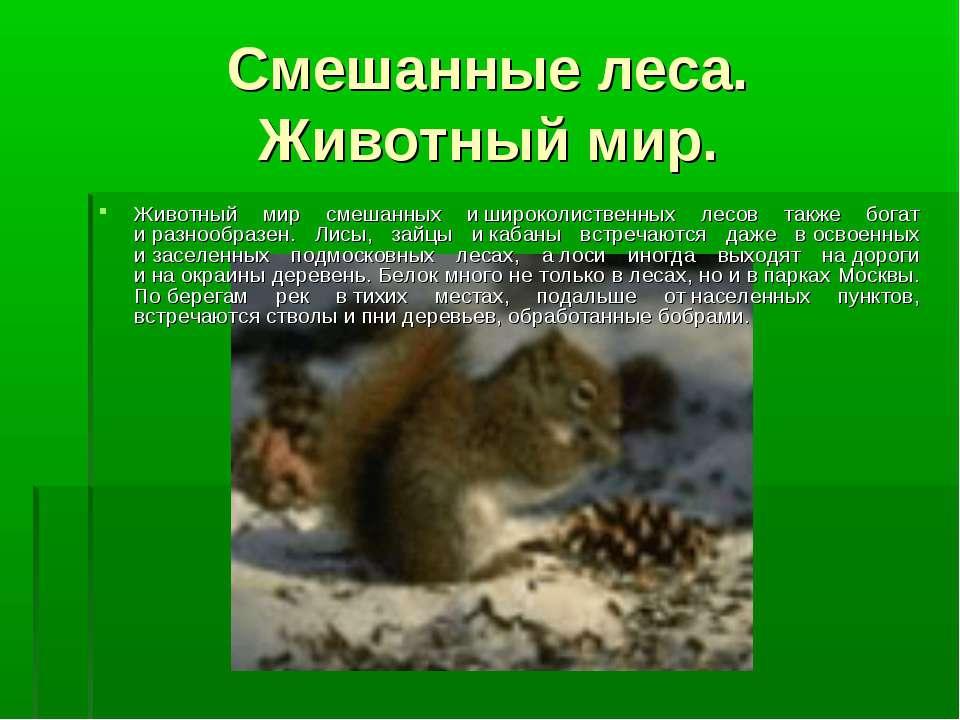 Смешанные леса. Животный мир. Животный мир смешанных ишироколиственных лесов...