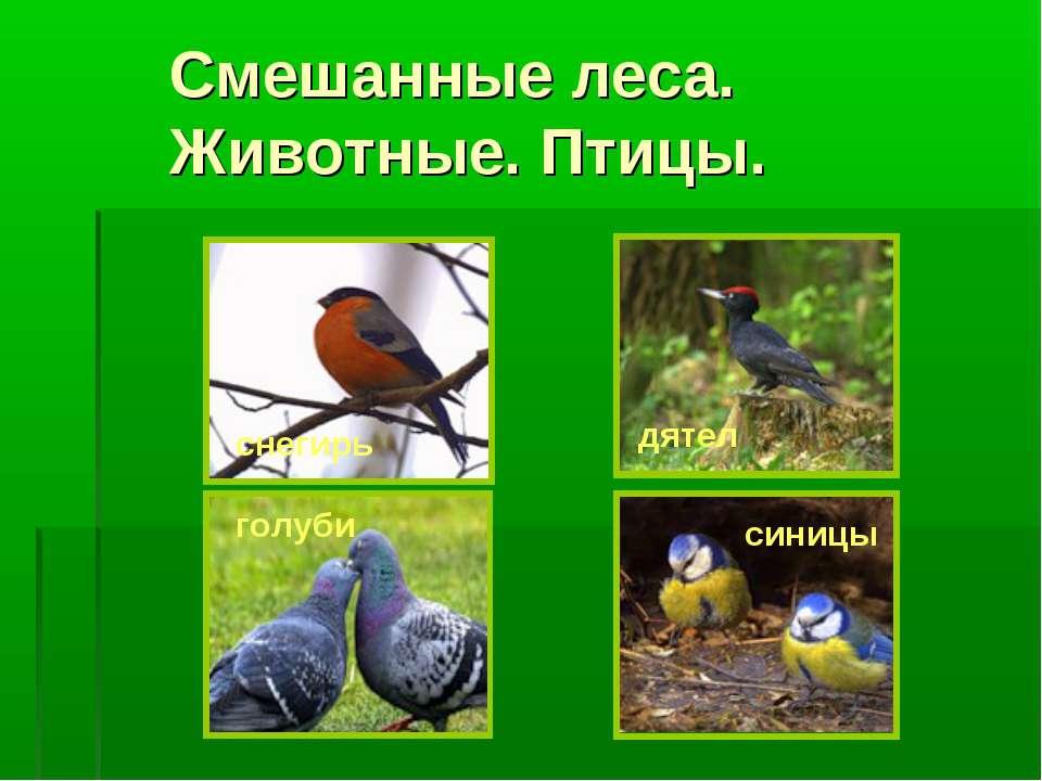 Смешанные леса. Животные. Птицы. голуби дятел синицы снегирь