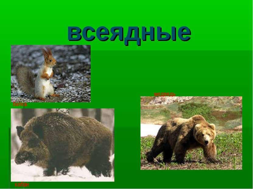 всеядные белка медведь кабан