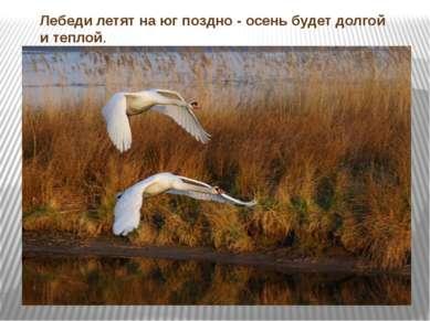Лебеди летят на юг поздно - осень будет долгой и теплой.