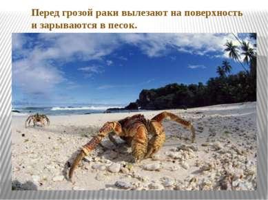 Перед грозой раки вылезают на поверхность и зарываются в песок.