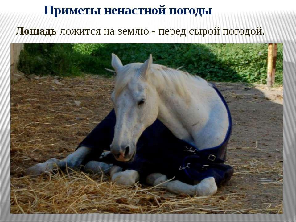 Лошадь ложится на землю - перед сырой погодой. Приметы ненастной погоды