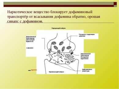 Наркотическое вещество блокирует дофаминовый транспортёр от всасывания дофами...