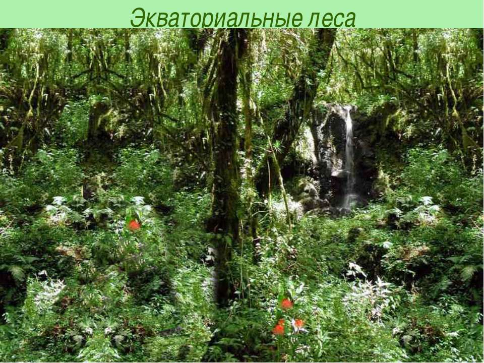 Экваториальные леса