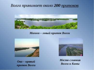 Волга принимает около 200притоков. Молога – левый приток Волги Ока – правый ...