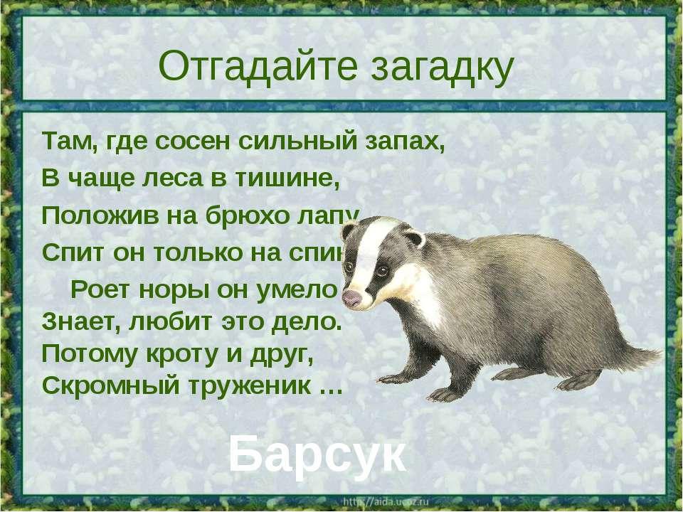 Отгадайте загадку Там, где сосен сильный запах, В чаще леса в тишине, Положив...