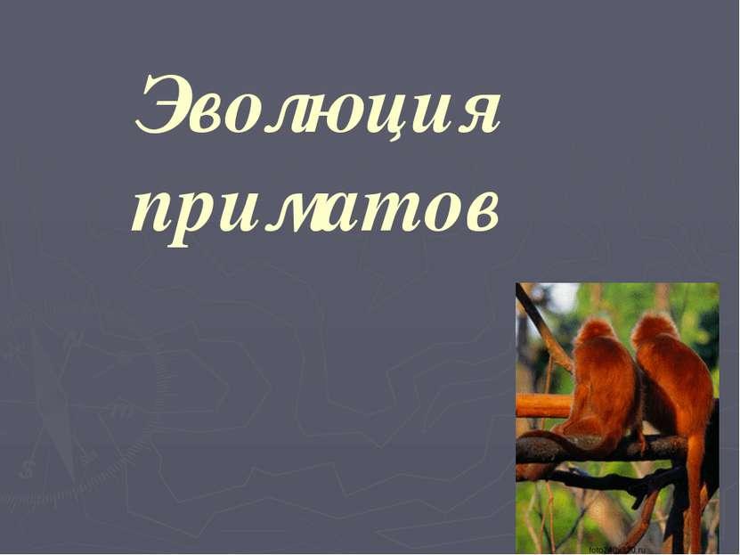 Полуобезьяны Лори Кошачий лемур Индри
