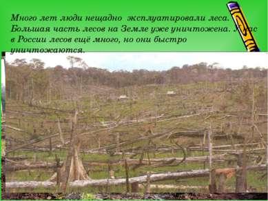 Много лет люди нещадно эксплуатировали леса. Большая часть лесов на Земле уже...