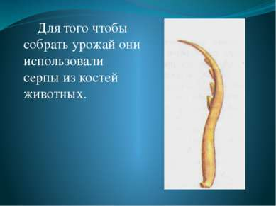 Для того чтобы собрать урожай они использовали серпы из костей животных.
