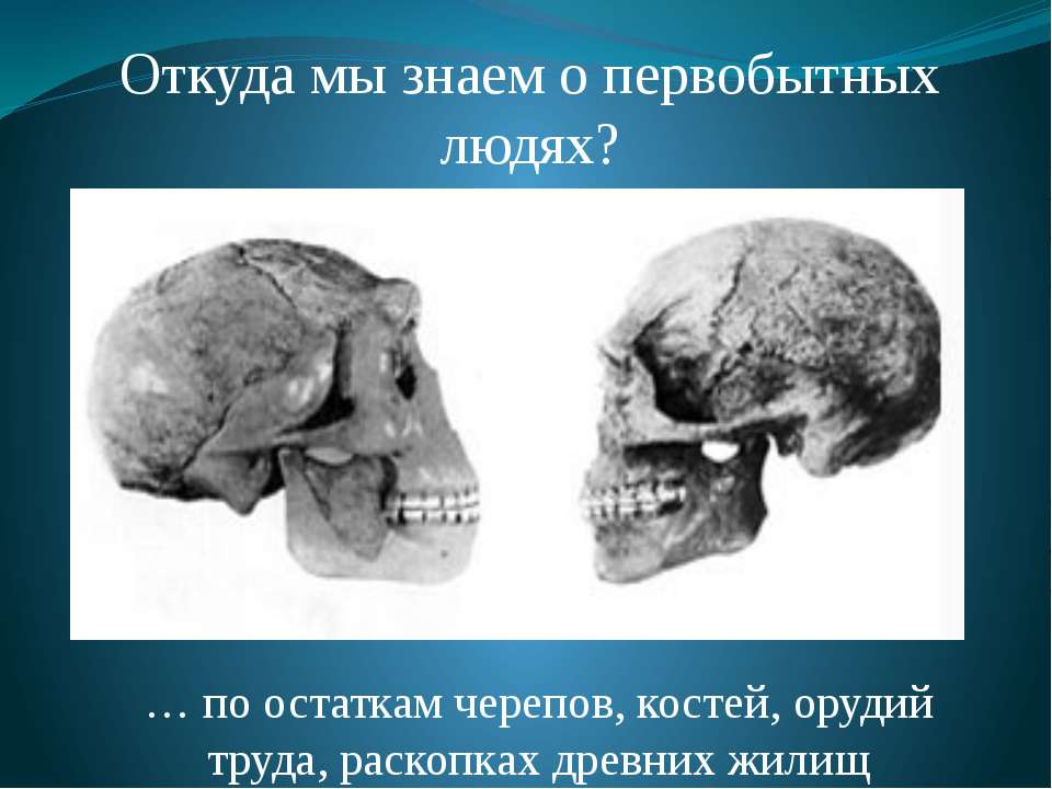 Откуда мы знаем о первобытных людях? … по остаткам черепов, костей, орудий тр...