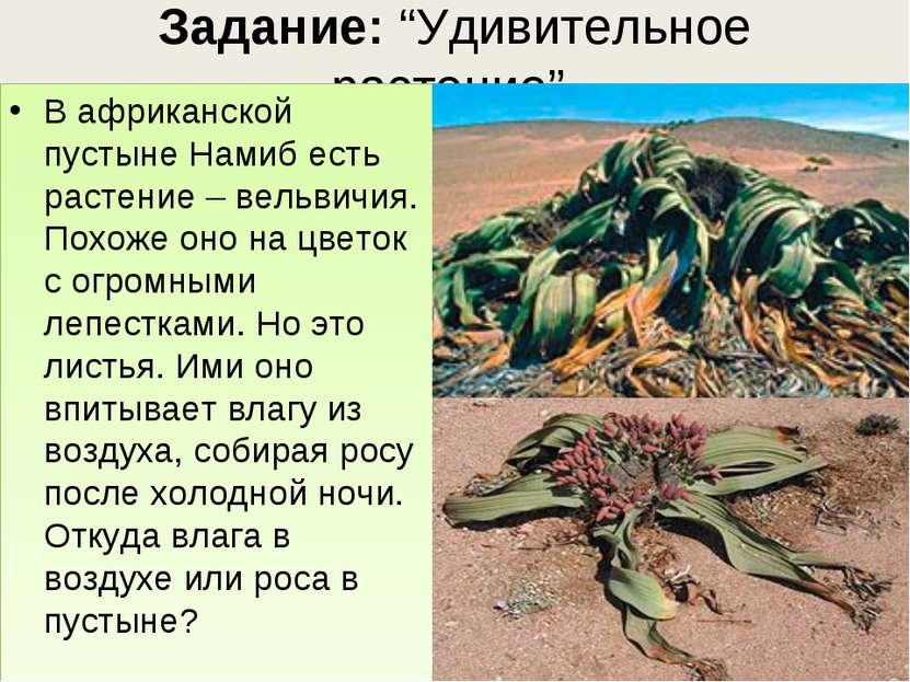 """Задание: """"Удивительное растение"""". В африканской пустыне Намиб есть растение –..."""