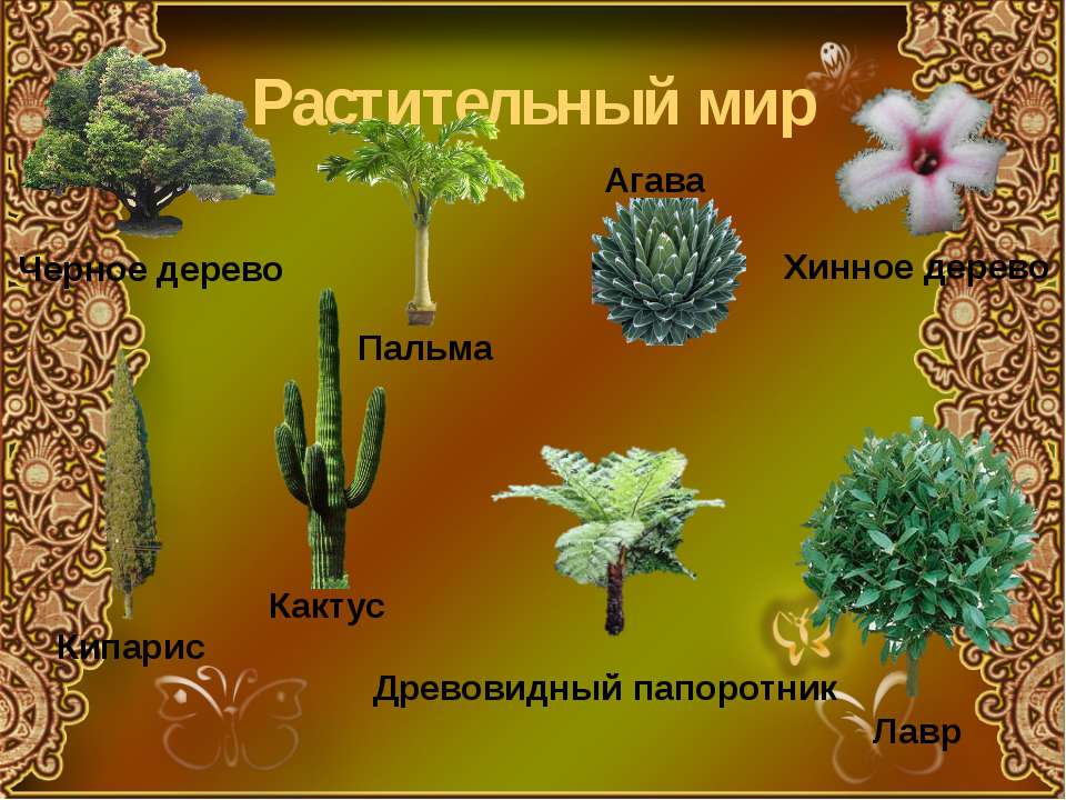 Растительный мир Черное дерево Хинное дерево Пальма Лавр Кипарис Древовидный ...