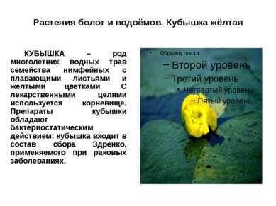 Растения болот и водоёмов. Кубышка жёлтая КУБЫШКА – род многолетних водных тр...