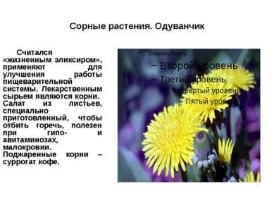 Сорные растения. Одуванчик Считался «жизненным эликсиром», применяют для улуч...