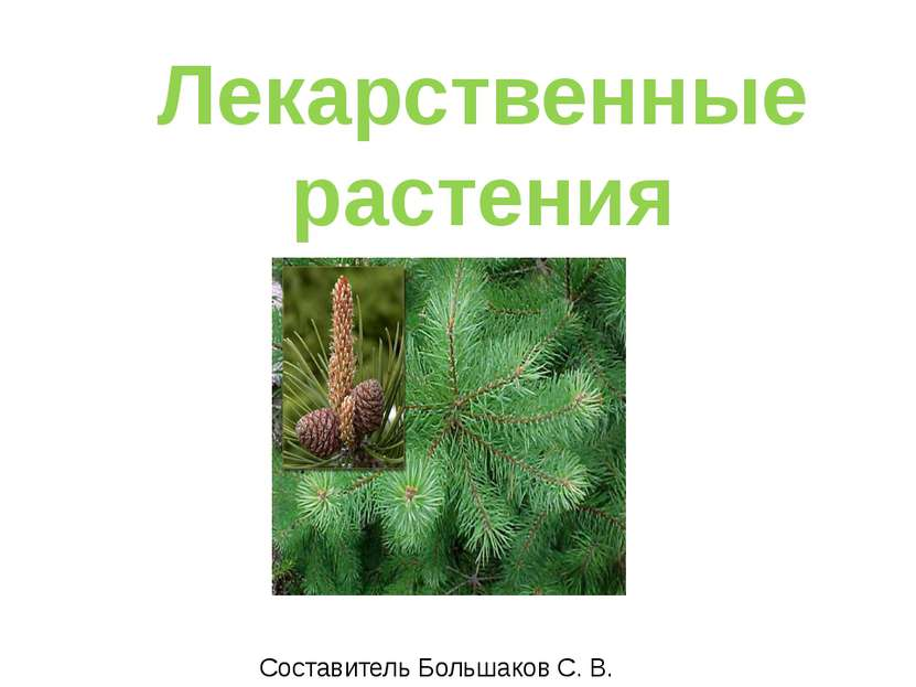Лекарственные растения Составитель Большаков С. В.