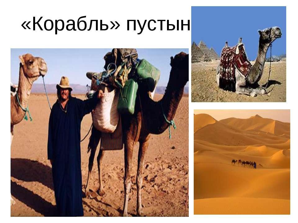«Корабль» пустыни