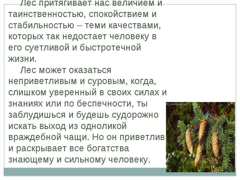 Лес притягивает нас величием и таинственностью, спокойствием и стабильностью ...