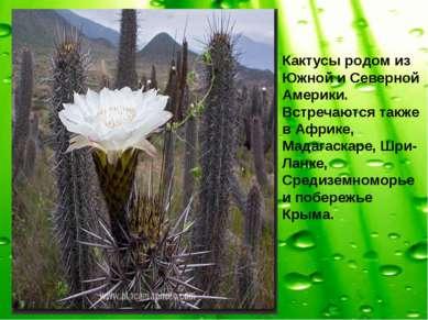 Кактусы родом из Южной и Северной Америки. Встречаются также в Африке, Мадага...