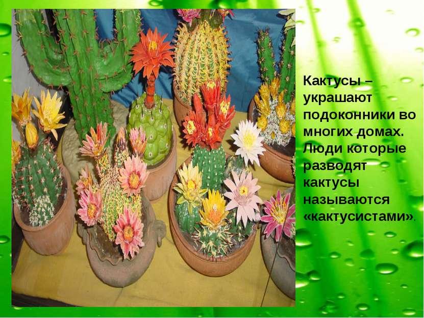Кактусы – украшают подоконники во многих домах. Люди которые разводят кактусы...